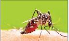 mosquito_1H x